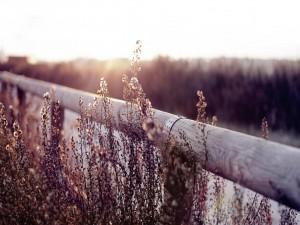 Plantas junto a una valla de madera