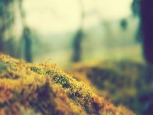 Musgo y hierba