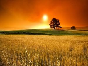 Sol iluminando el campo al atardecer