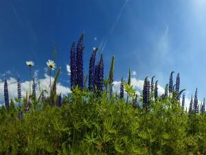 Bonitas flores silvestres iluminadas por el sol