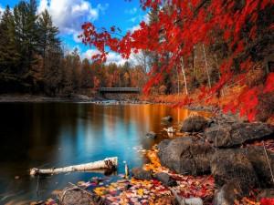 Árboles otoñales junto a un río