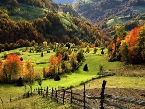 Árboles otoñales en los prados verdes