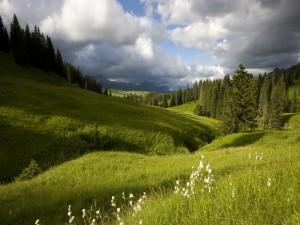 Pinos sobre la hierba verde