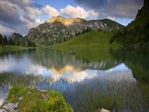 Vegetación en un bonito lago de montaña