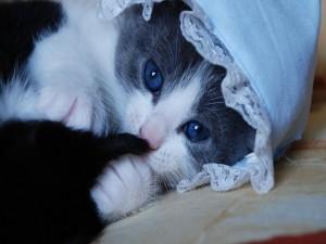 Lindo gatito con un gorrito