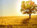 Árbol otoñal en el campo