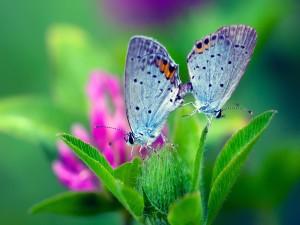 Dos mariposas posadas en las hojas verdes