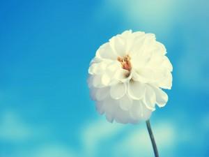 Hermosa flor blanca