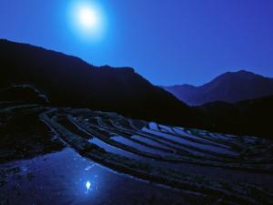 Noche iluminada por la luna