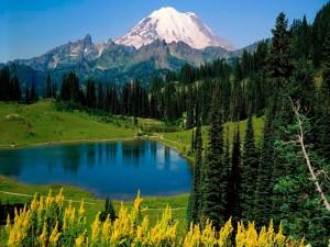 Bonito lago entre pinos y montañas