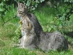 Pareja de gatos sentados en la hierba