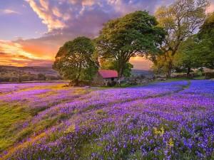 Amanece en el campo de flores