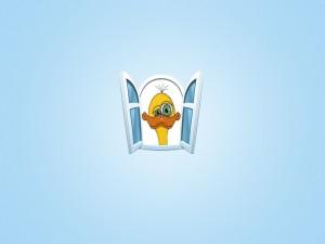 Pato en la ventana