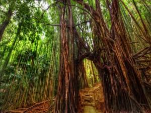 Pasarela en el bosque de bambú