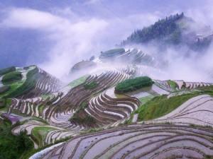 Niebla sobre unos campos cubiertos de agua