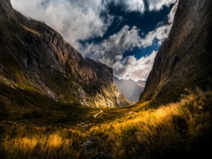 Plantas iluminadas en la montaña