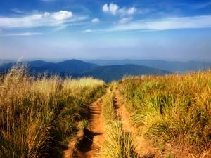 Camino campestre