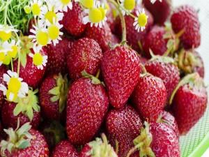 Fresas y margaritas silvestres