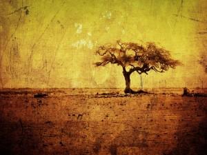 Paisaje árido con un árbol