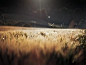 Hierbas iluminadas por el sol
