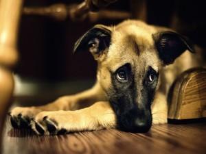 Un perro tristón