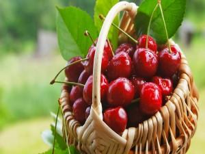 Cesta con jugosas cerezas