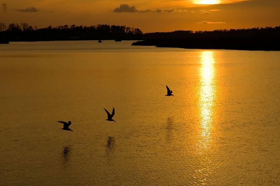 Aves volando a ras del agua