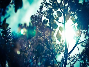 Luz sobre las ramas de los árboles