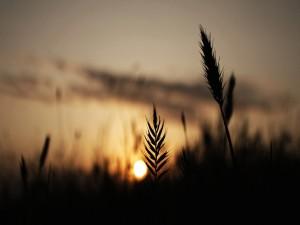 Sol en el horizonte