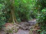 Las raíces de los árboles
