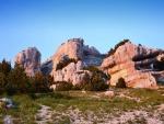 Árboles sobre las rocas