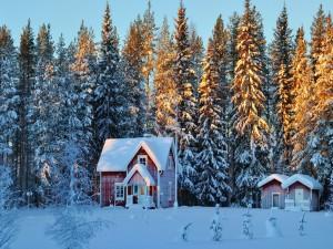 Pequeñas casas en un bosque nevado