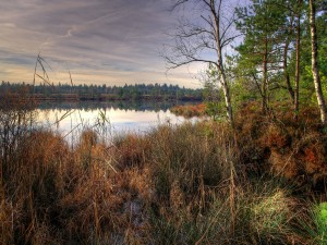 Vegetación junto a un lago
