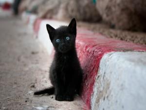 Un gatito negro callejero