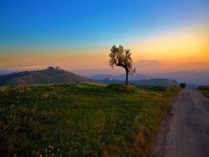 Bonito amanecer visto desde el campo