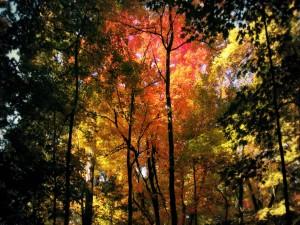 Árboles de colores en otoño