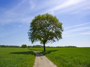 Árbol proyectando su sombra sobre el camino