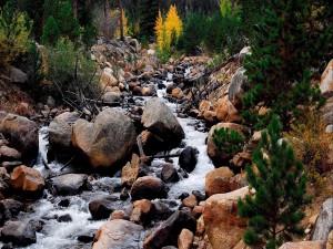 Árboles y piedras en el cauce del río