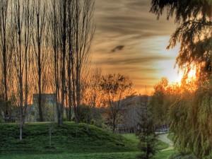 Sol sobre un parque