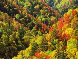 Árboles con los bonitos colores del otoño