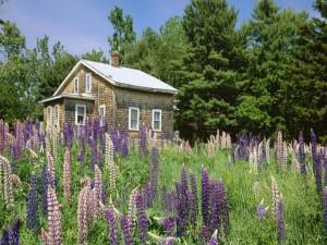 flores silvestres junto a una casa