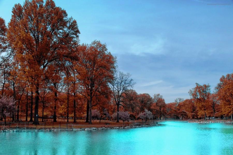 Árboles otoñales junto al estanque
