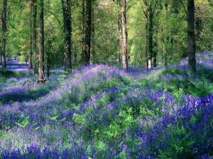 Flores en el bosque