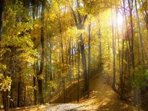 Sol iluminando un bosque otoñal