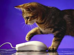 Gatito observando el ratón del ordenador