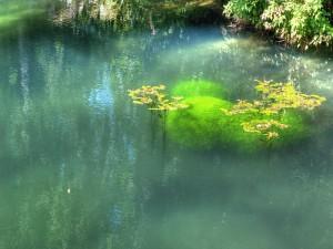 Plantas creciendo en el agua