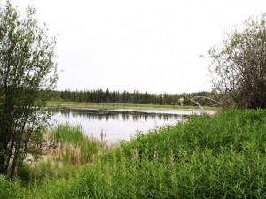 Plantas a orillas del agua