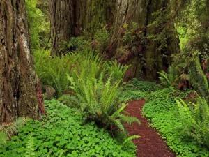 Helechos en un bosque