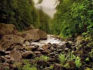 Un estrecho río pedregoso