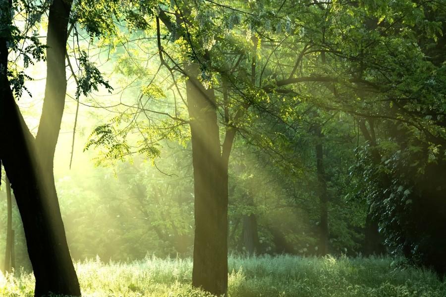 Los rayos del sol penetran entre las ramas de los árboles